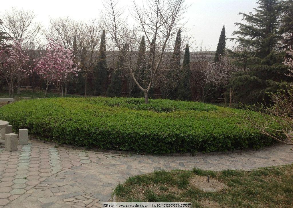 绿色苗圃 苗圃 绿色 植物 小树 春天 图片素材 树木树叶 生物世界