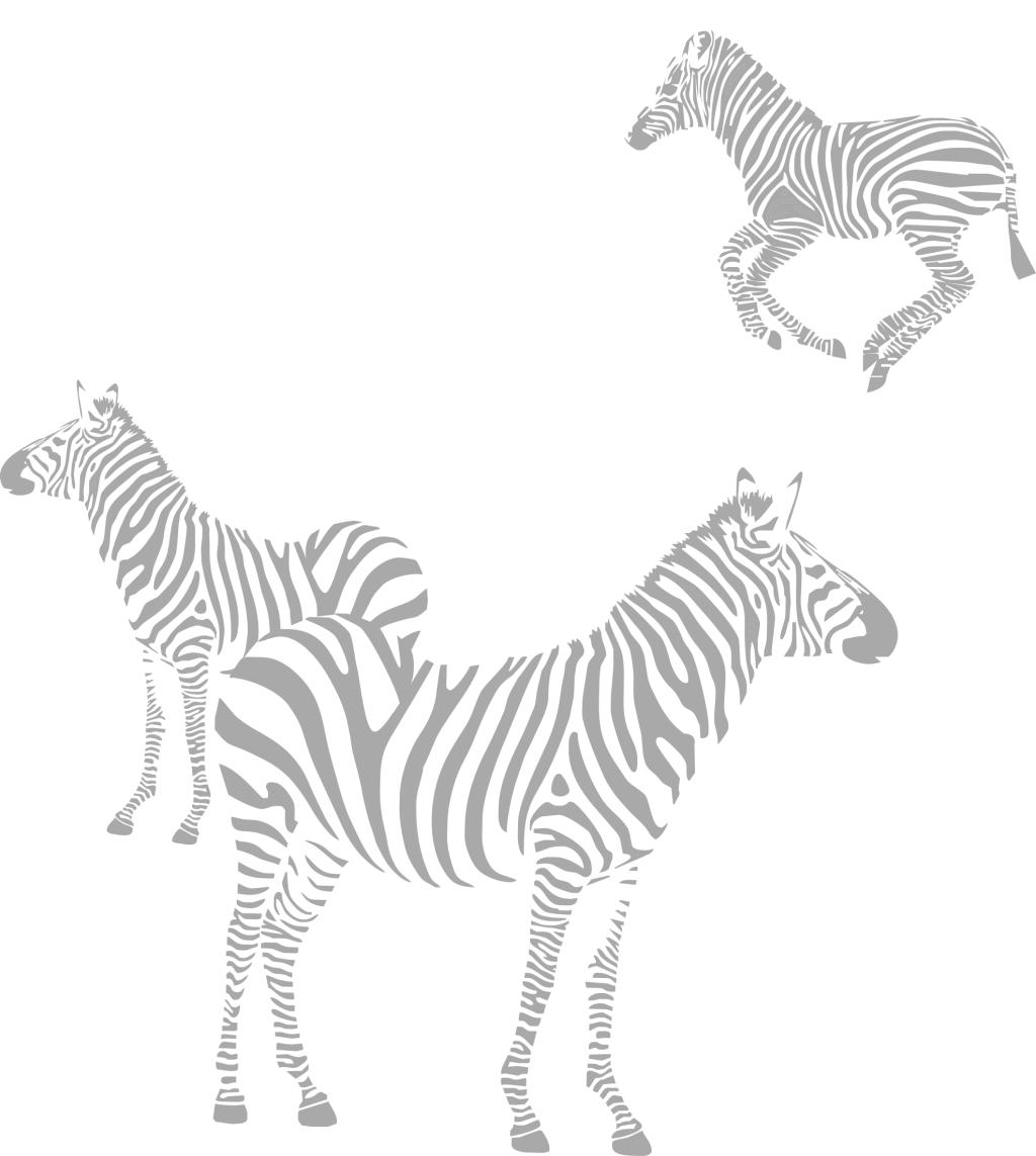 斑马免费下载 斑马 动物