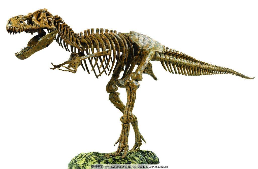 恐龙 恐龙图片素材下载 骨架 化石 传统文化 文化艺术 建筑景观