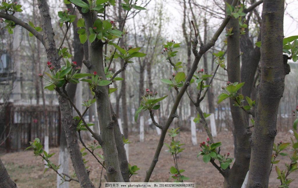 发芽 春天 绿芽 树芽 树枝 树杈 树桠 结果 果实 自然风景 自然景观