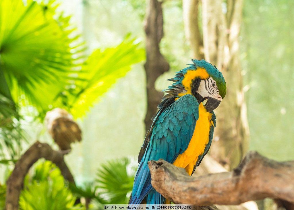 鹦鹉 可爱 羽毛 小鸟 巴哥 鸟类 生物世界 摄影 300dpi jpg