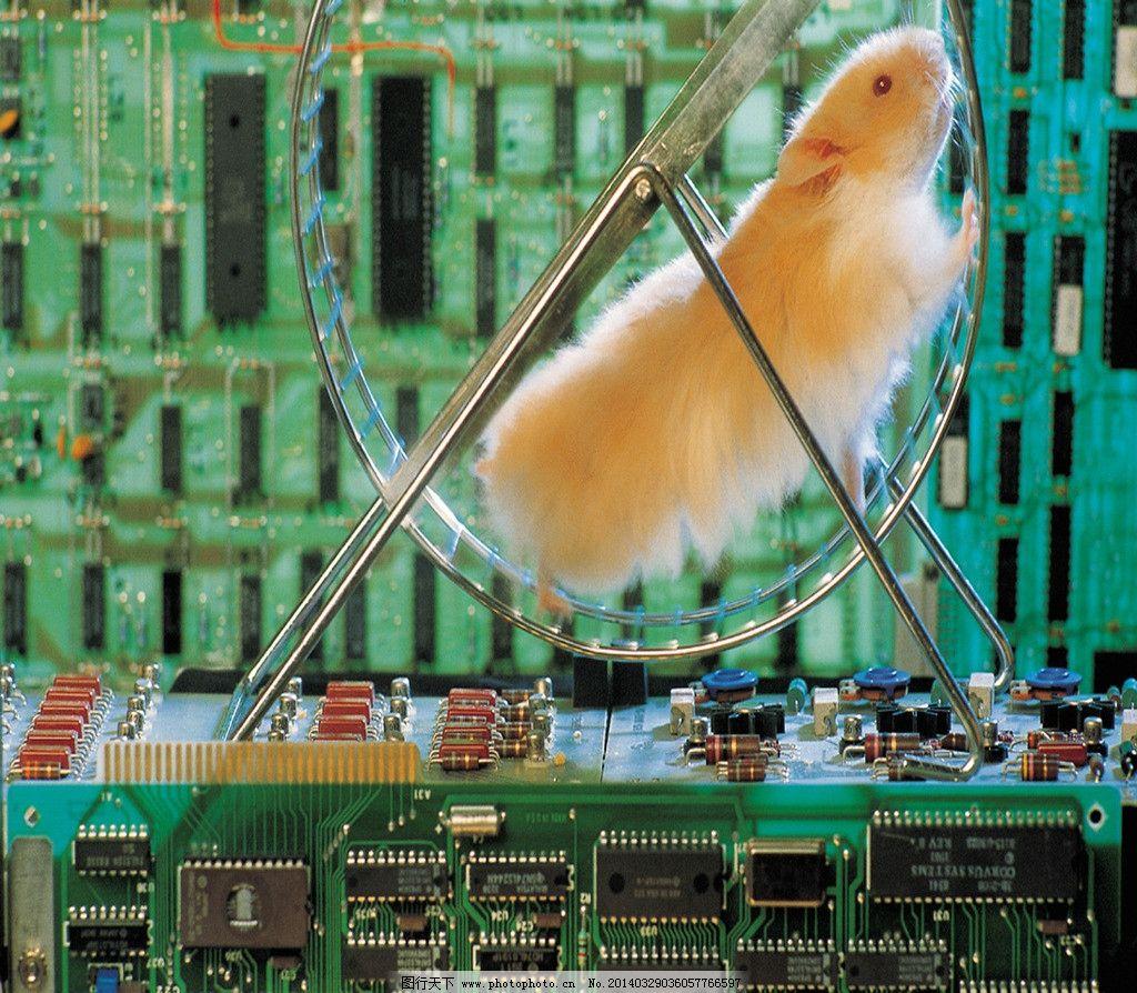 白鼠 实验 电路板 人工实验 白鼠实验 小白鼠 其他生物 生物世界 摄影