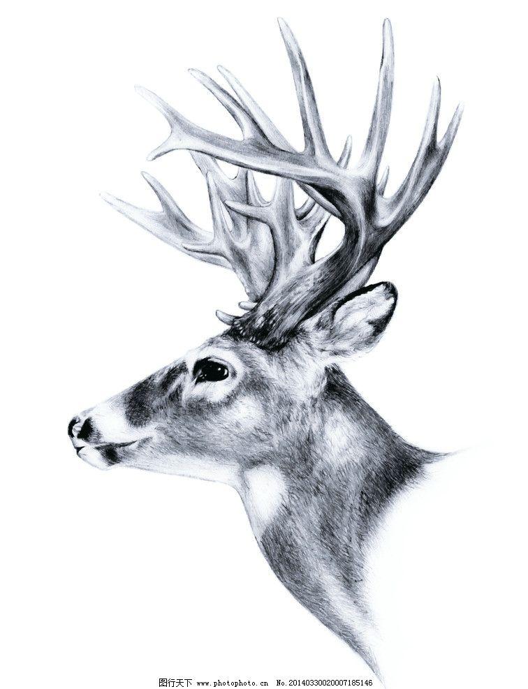 素描动物鹿图片