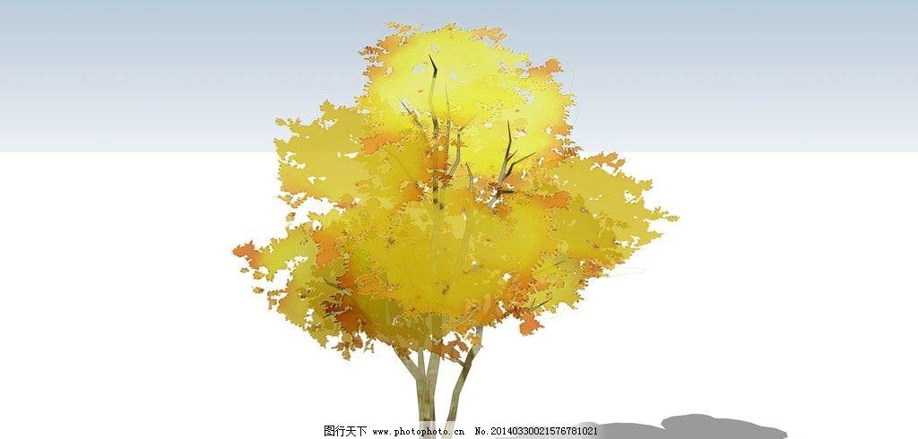 枫树木材的设计的产品