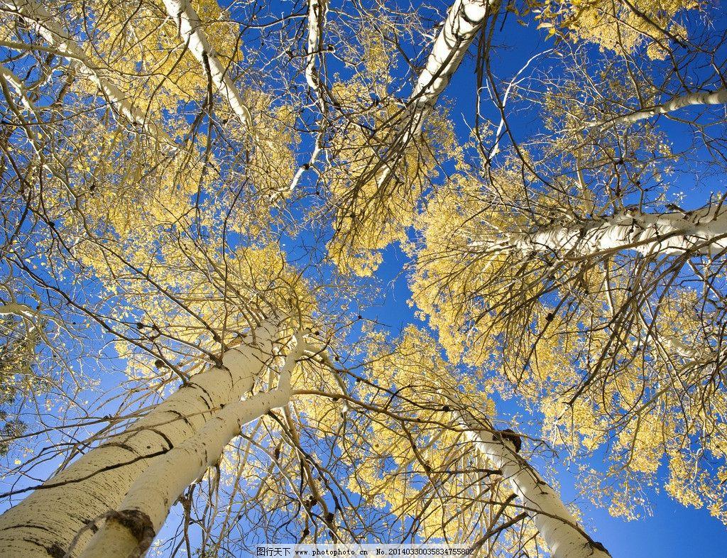 巍峨高山 蓝天 白云 高山 风景 巍峨 树木树叶 生物世界 摄影 240dpi