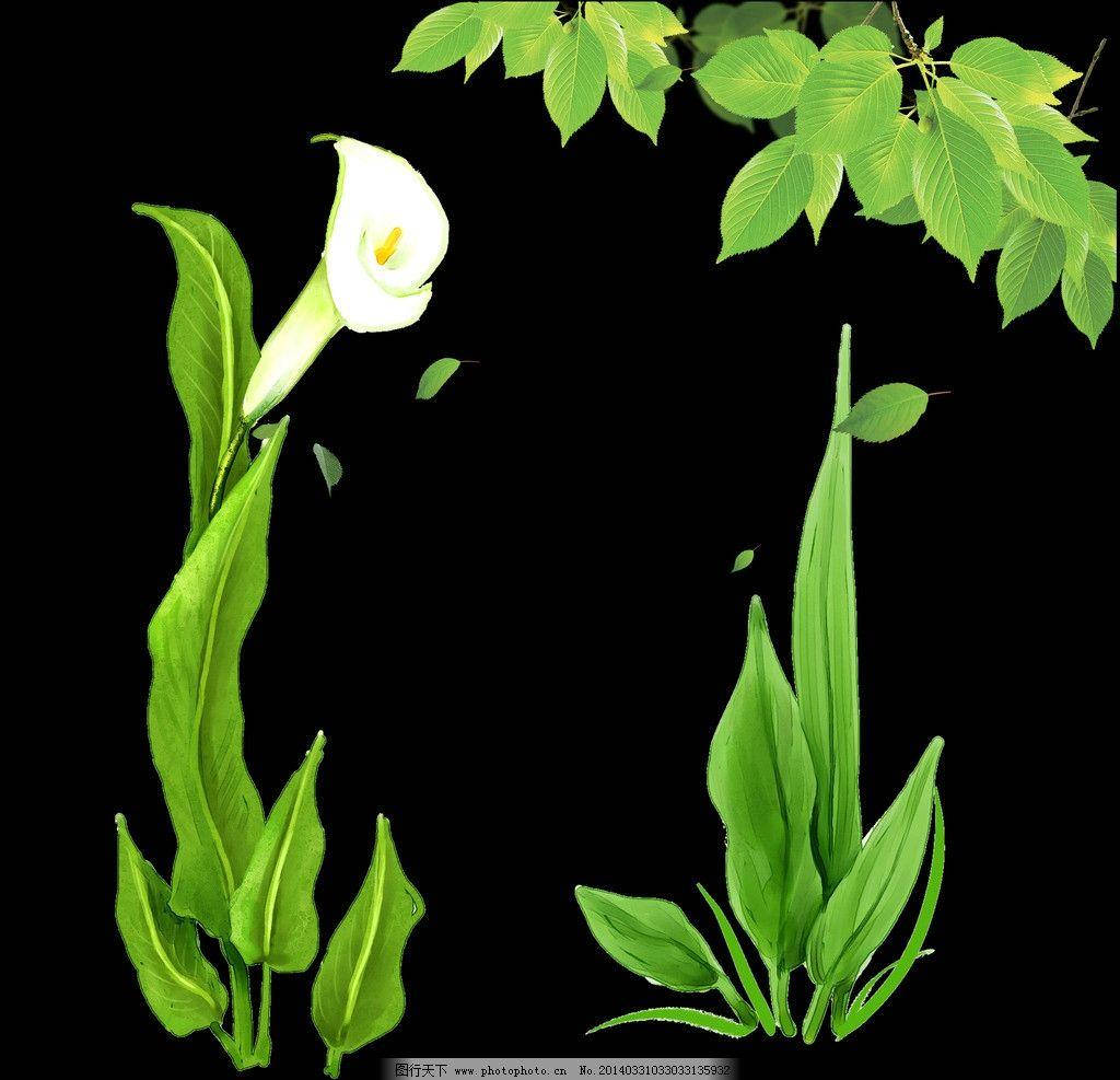 树叶 植物 白色花朵图片