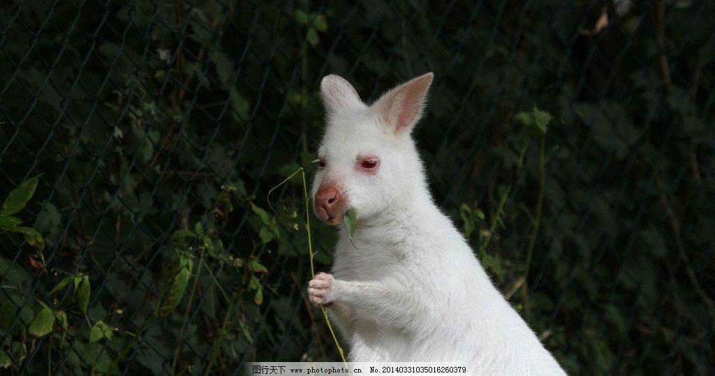 小袋鼠 班纳特的小袋鼠 动物 萌 可爱 树叶 树枝 爪子 铁丝网