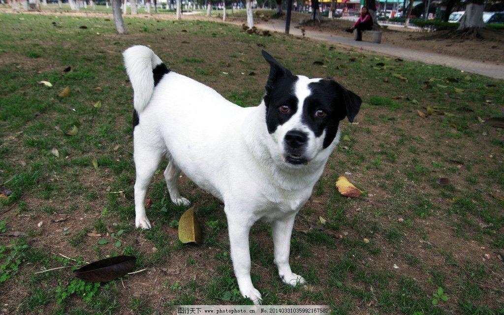 动物世界花狗狗 休闲公园 绿色公园 生态公园 绿地 草地 绿树