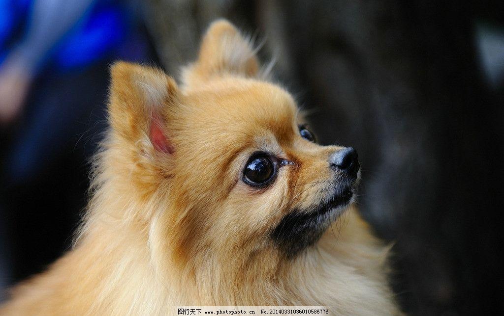 狗狗 可爱 长毛 萌呆 其他生物 摄影